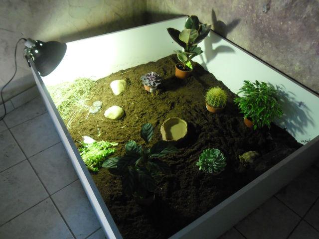 voila mon nouveau terrarium pour ma sulcata sulcata 84. Black Bedroom Furniture Sets. Home Design Ideas