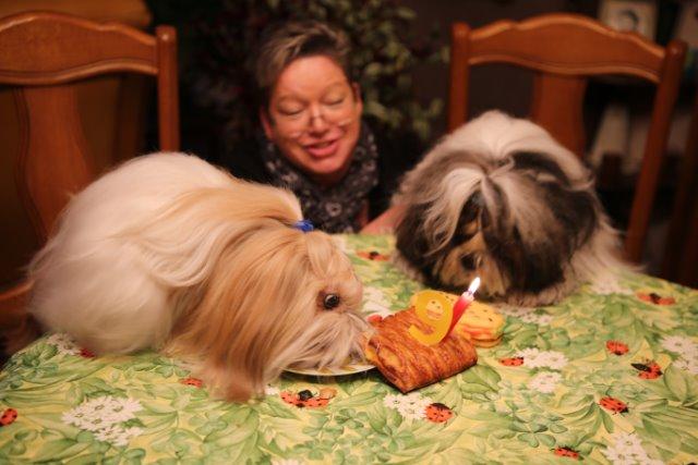 chien qui essaye de vomir Il est donc important de bien surveiller l'état de santé d'un chien qui vomit,  en général, un chien risque de vomir dans la voiture .
